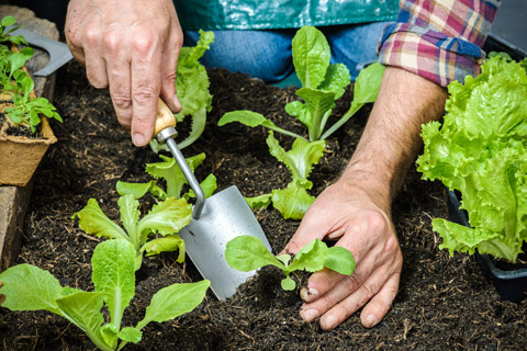 Gardening Tips Using Rock Dust As A Fertilizer